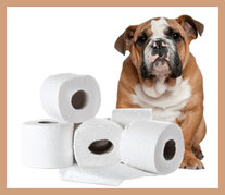 Doggie and toilet paper
